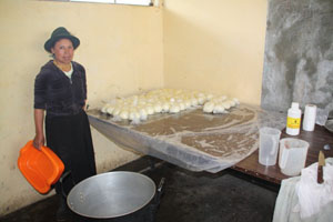 The Beginning of Cheese Production in Esperanza